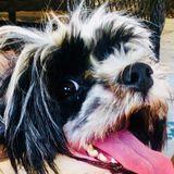 Young dog walker who needs summer job
