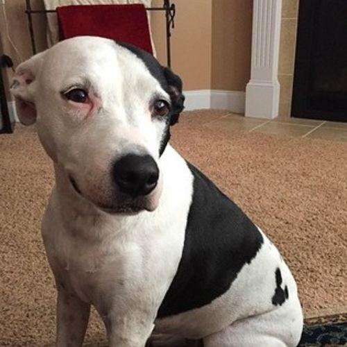 Pet Care Job Tarah Jeffery's Profile Picture
