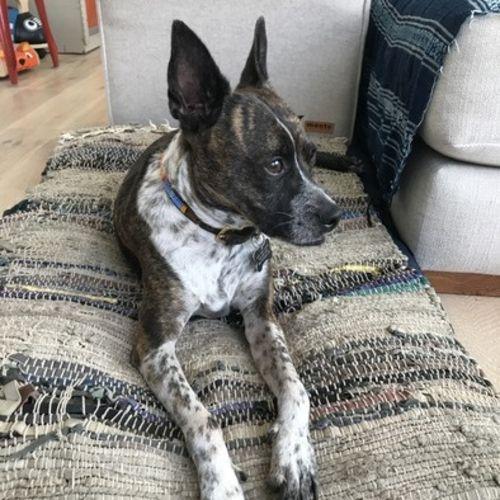 Pet Care Job Gianna C's Profile Picture