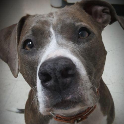 Pet Care Provider Trish W Gallery Image 1