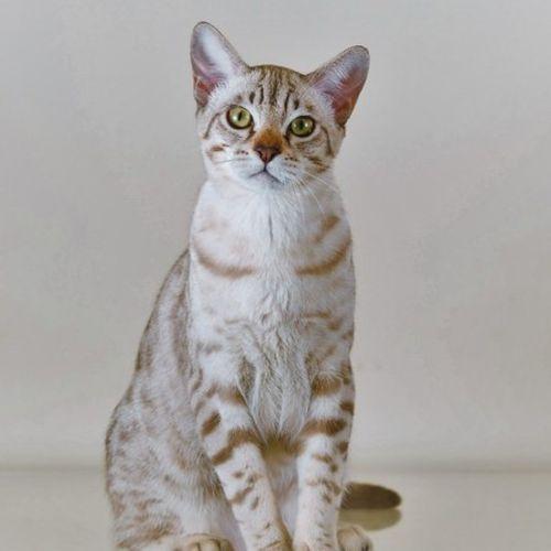 Pet Care Job Katrina S's Profile Picture