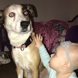 Talented Pet Care Provider in Land O lakes