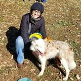 Professional dog trainer offering walking services in the Kansas City area