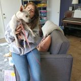 Caring Cat Sitting Professional in Fullerton, California