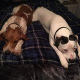 Two lovable hounds seek fun loving human for weekend PJ jammy jams