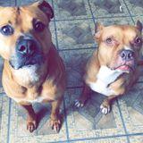 Trustworthy Dog Walker Needed in Yonkers