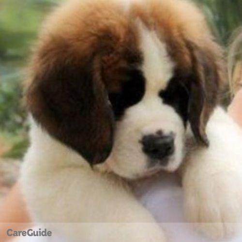 Pet Care Provider Sarah Z's Profile Picture
