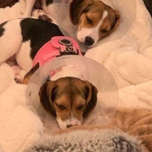 Pet Care Job Rondi B's Profile Picture