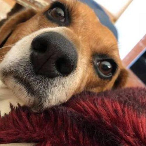 Pet Care Job Shannon S's Profile Picture