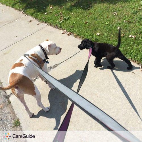 Pet Care Provider Shea H's Profile Picture