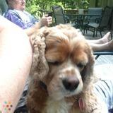 Need a dog watcher