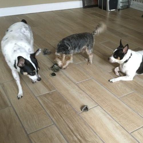 Pet Care Provider Sharon H's Profile Picture
