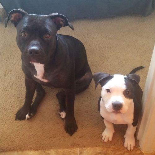 Pet Care Provider Megan B Gallery Image 1