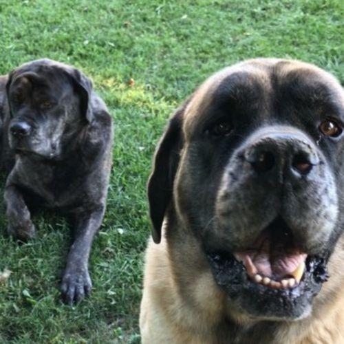 Pet Care Job Gabe & Teryn M's Profile Picture