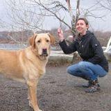 Dog Walker Job, Pet Sitter Job in Farmington
