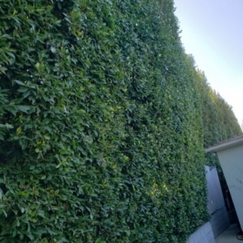 My name is Luis Valenzuela I offer my service as a gardener around the city of Los Angeles..
