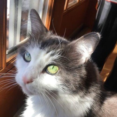 Pet Care Provider Sandy G Gallery Image 1