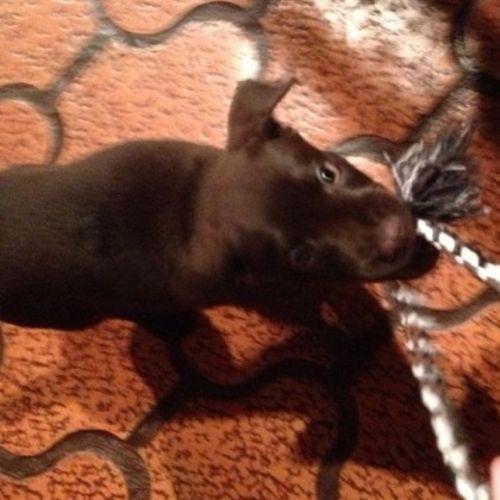 Pet Care Provider Sabrina A Gallery Image 2