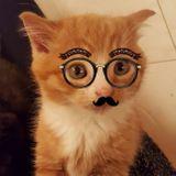 Cat Whisperer 3