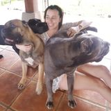 Good Dog Sitting Professional Available May 18 -