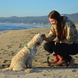 Dog Walker, Pet Sitter in Davis