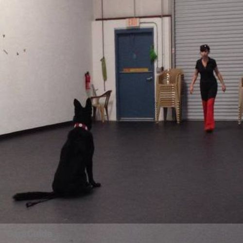 Pet Care Provider Sandrine M's Profile Picture