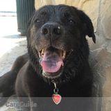 Dog Walker Job, Pet Sitter Job in Cullman