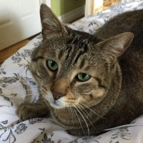 Seeking house/pet sitter during vacations for 3 cats and 2 dogs in Port Credit