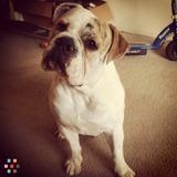 Dog Walker, Pet Sitter in Fresno