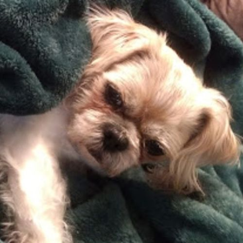 Pet Care Provider Kaitlyn S's Profile Picture