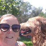 Oshawa Dog Walker Available in Oshawa/Whitby area, morning, afternoons or evenings