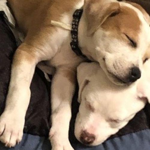 Pet Care Provider Cindy L's Profile Picture