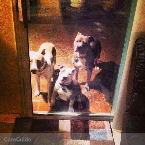 Pet Care Provider Ever Linarte's Profile Picture
