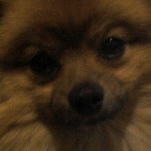 Pet Care Job Lois R's Profile Picture