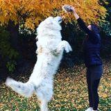 Seeking a Dog walking Job in Vernon, British Columbia
