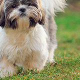 Wonderful Pet Care Provider Wanted in Edmonton