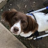 Great Pet Carer Available Immediately