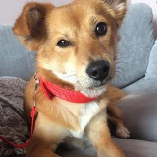 Pet Care Provider Stan M's Profile Picture