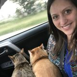 Employing a Disciplined Pet Sitter/House Sitter in Peoria
