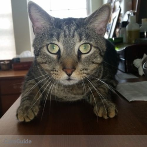 Pet Care Provider Dianne Racek's Profile Picture