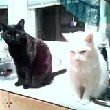 Karrie's Caretaking Pet Sitting Services seeking new clientele