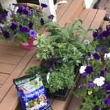 Looking to start with a couple big spring garden projects with potential to hire for weekly weeding services for the summer.