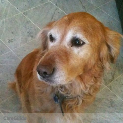 Pet Care Provider Carole N's Profile Picture