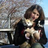 Please call Rebecca for a loving dogsitter or catsitter for your furbaby! I also look after farm animals as well.