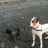 Dog Walker in Everett