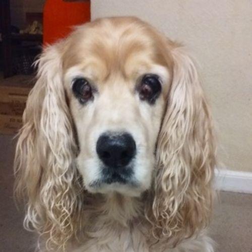 Pet Care Provider Lydia Teran Gallery Image 1