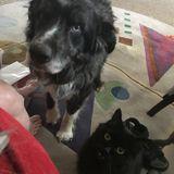 Dependable, mature help for pet & homesitting.