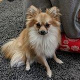 Dog Walker, Pet Sitter in Hoboken
