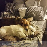 Two loving dogs are looking for a loving sitter :)