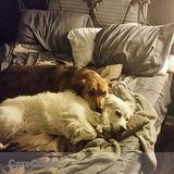 Dog Walker Job, Pet Sitter Job in Niagara Falls